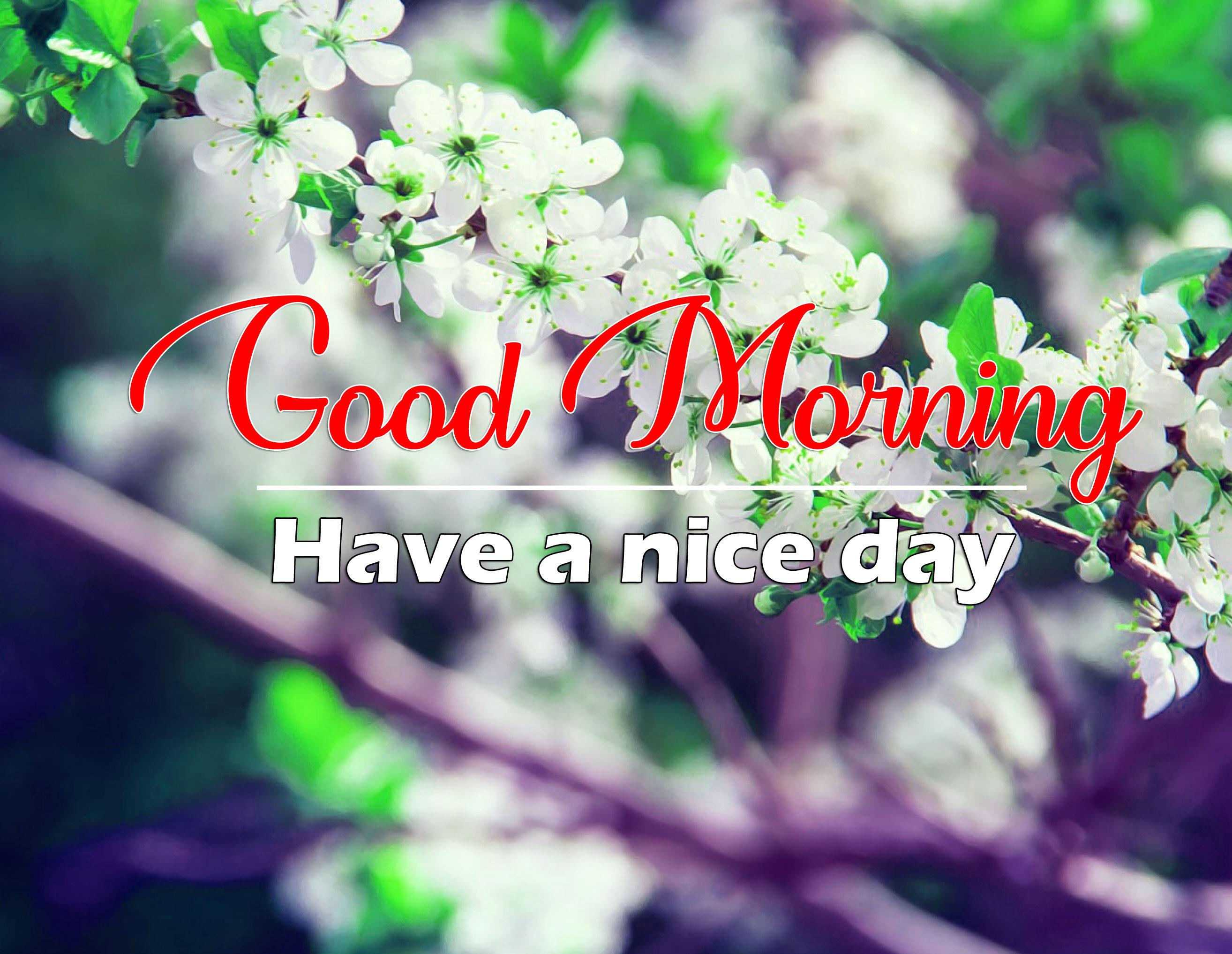 Beautiful Good Morning Images Wallpaper