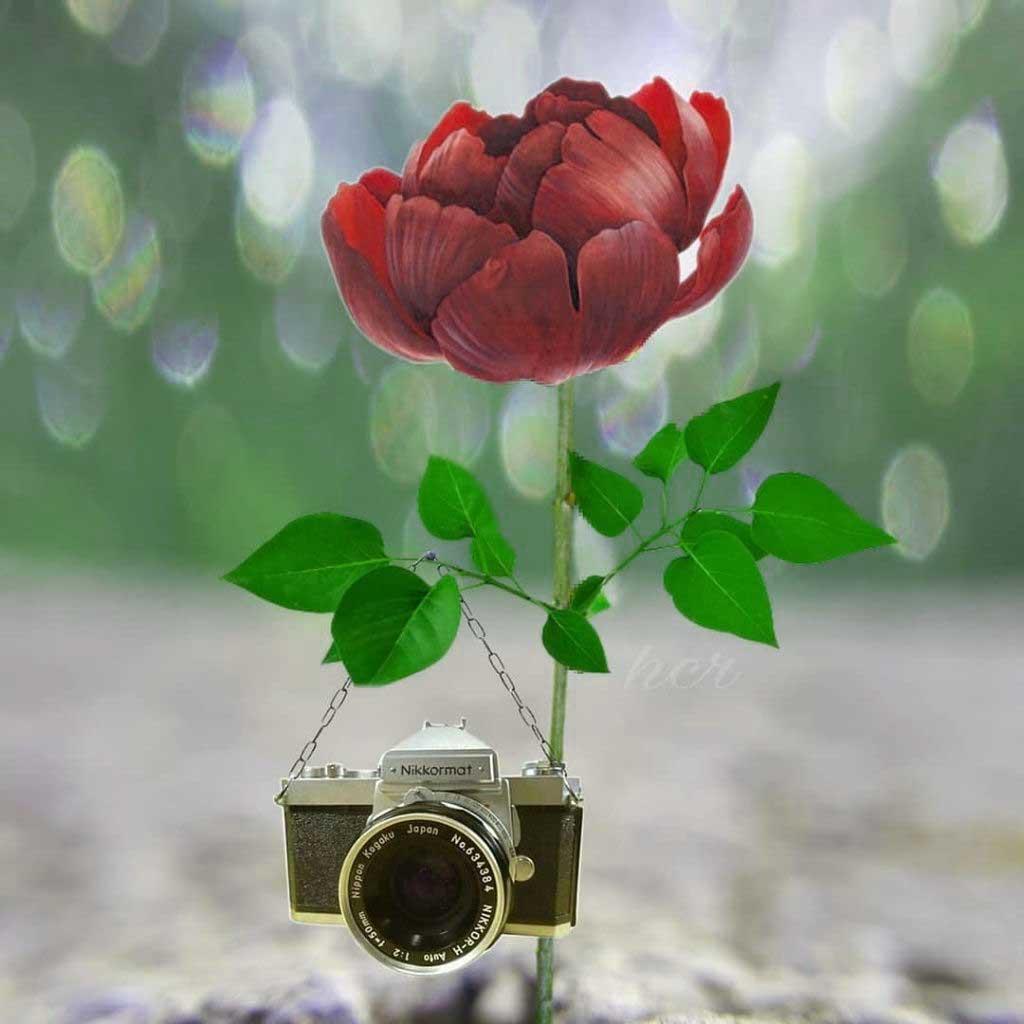 Beautiful Whatsapp Dp Hd Images Photo