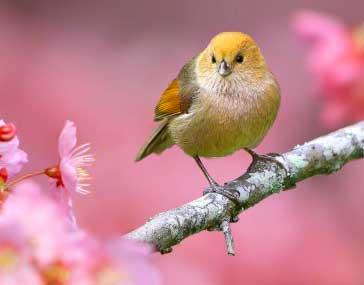 Bird Nice Whatsapp Dp Pics Pictures