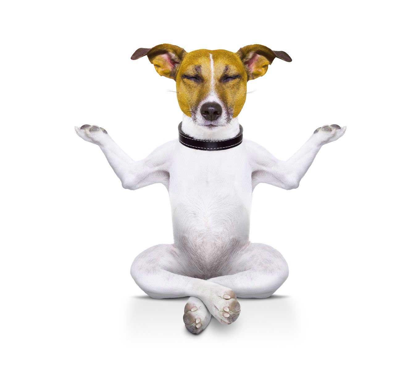 Dog Latest Funny Whatsapp DP Wallpaper Download