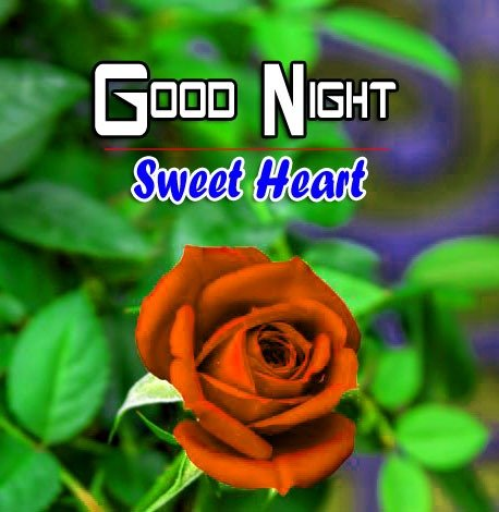 Free Good Night Wishes k Images Wallpaper With Red Rose