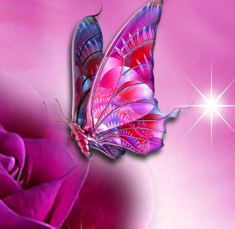 Free Butterfly Nice Whatsapp Dp Wallpaper