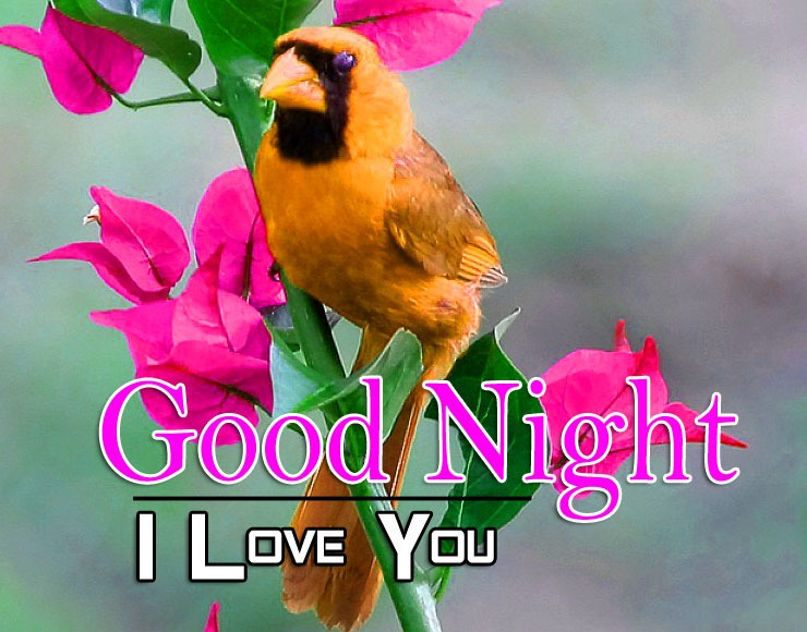 Free Latest Good Night Images Pics Download