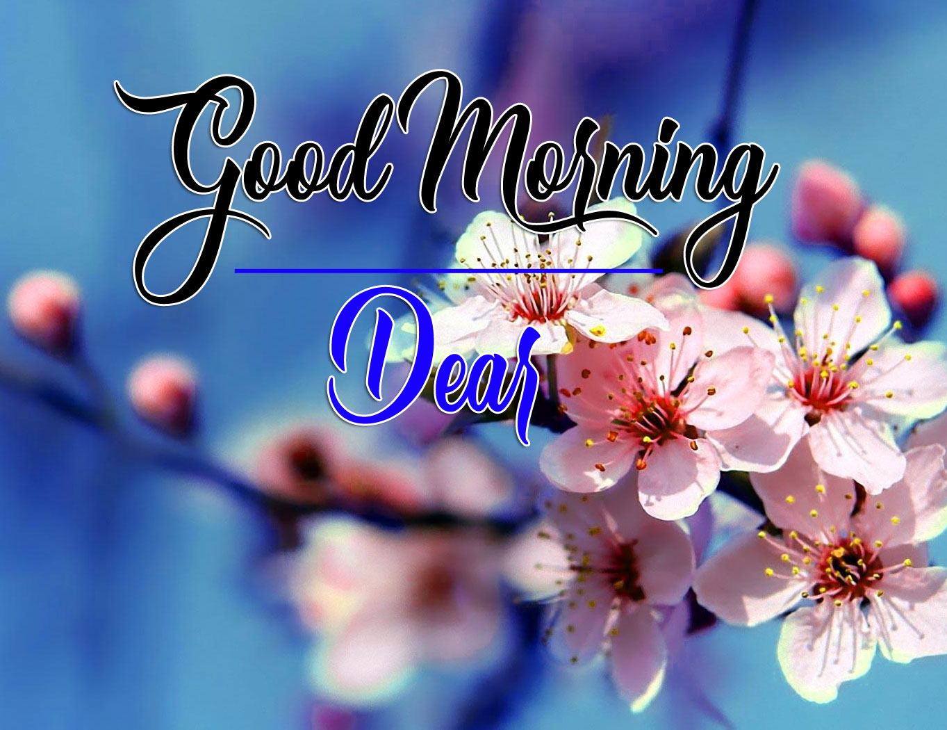 Good Morning Images Free Pics