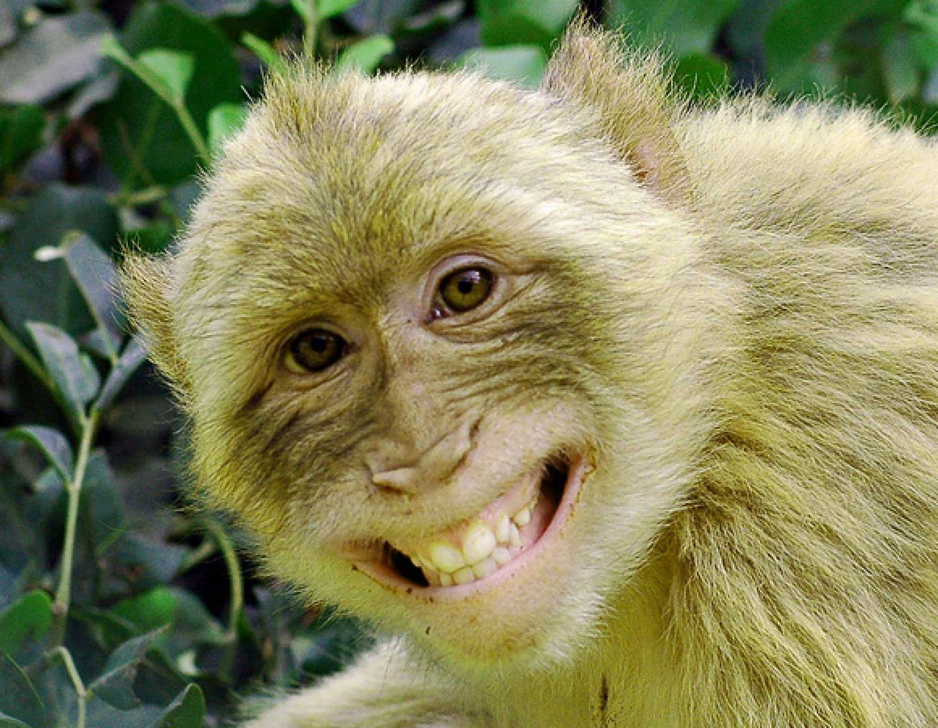 Monkey Latest Funny Whatsapp DP Wallpaper Download