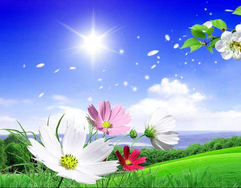 New Beautiful Whatsapp Dp Images Hd