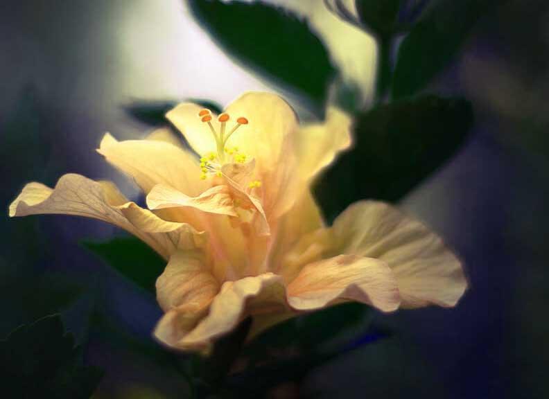 Nice Whatsapp Dp Pics Photo With Flower