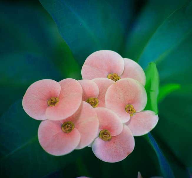 Nice Whatsapp Dp Pics With Flower