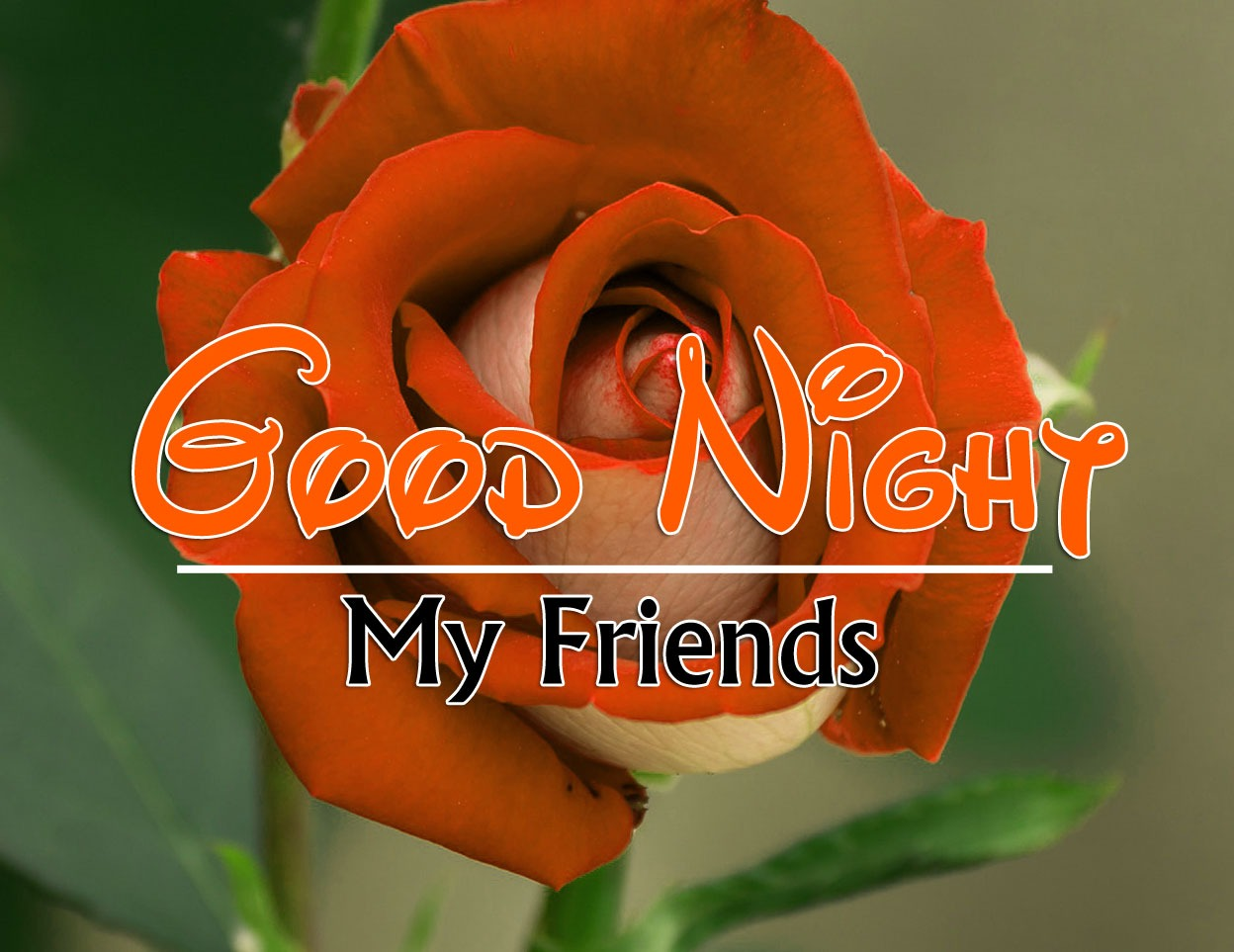 Red Rose Good Night Wishes k Images Pics Pictures Download