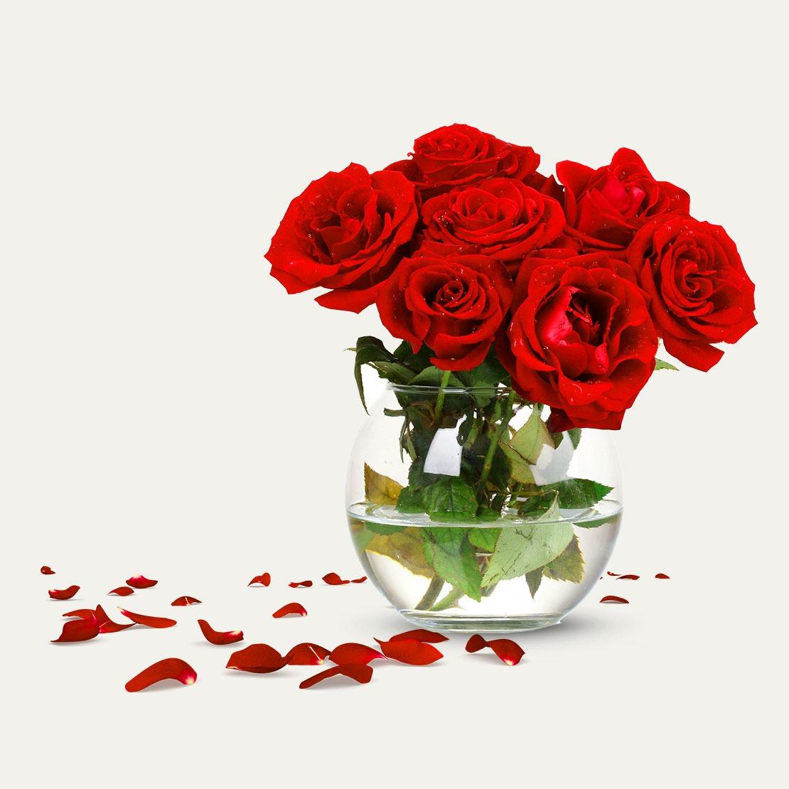 Rose Whatsapp DP Wallpaper Download