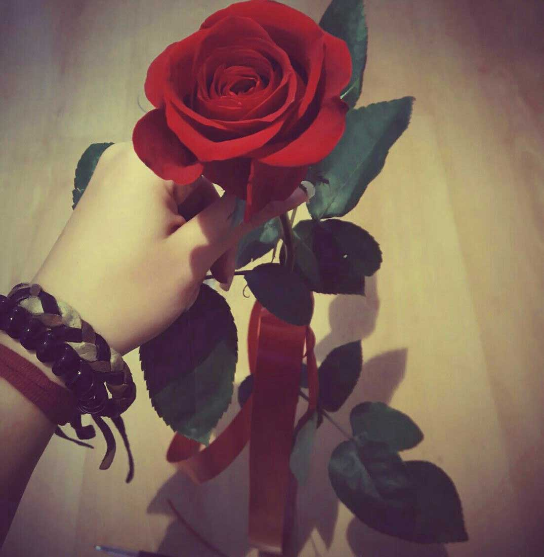 Whatsapp Dp Photo Download With Red Rose