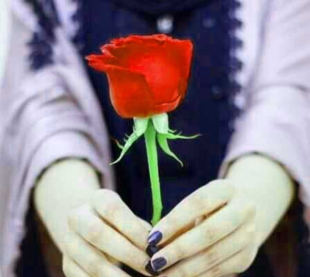 With Red Rose Nice Whatsapp Dp Pics Images Download