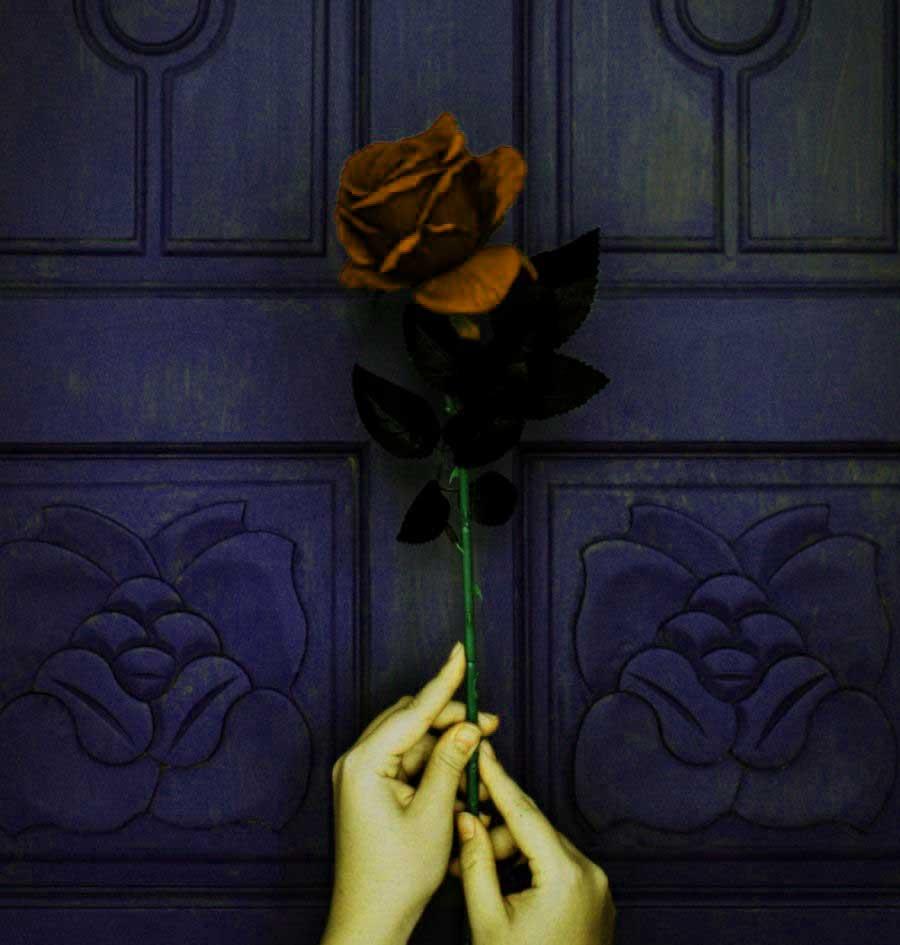 red rose images hq download