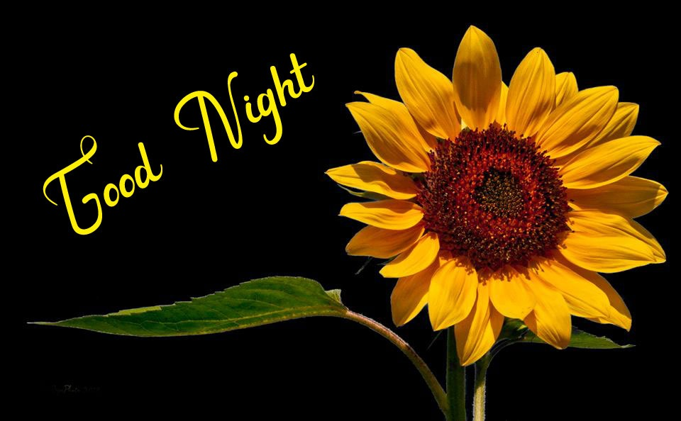 Beautiful Good Night Images photo for download