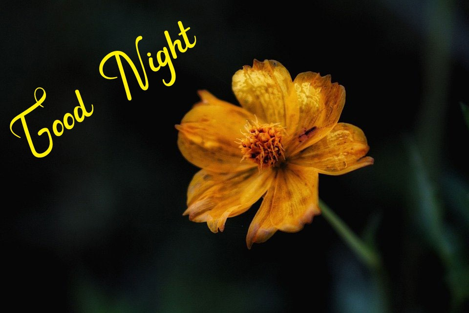 Beautiful Good Night Images photo free hd
