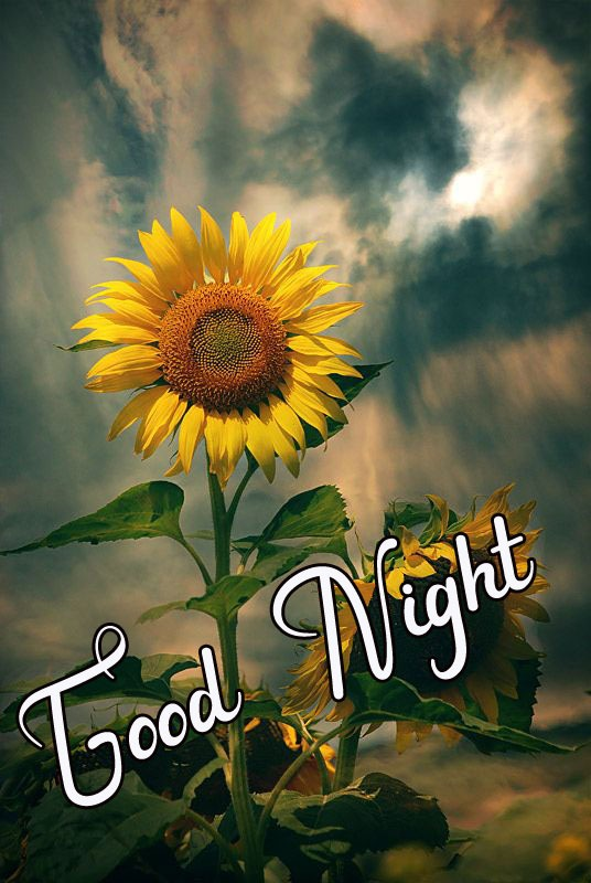 Beautiful Good Night Images pics hd download