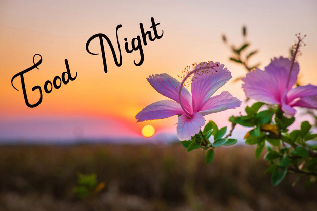 Beautiful Good Night Images wallpaper for free hd