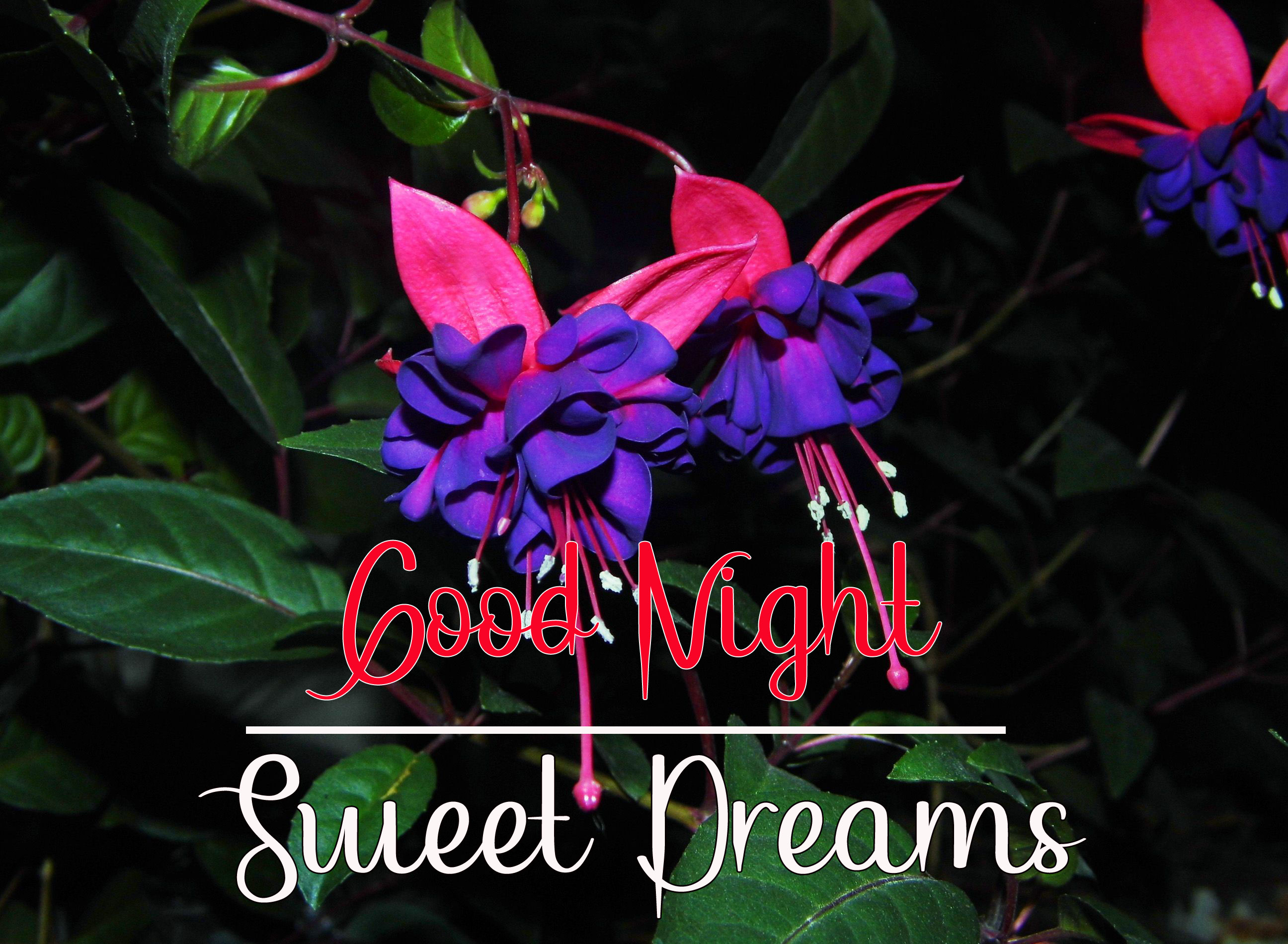 Beautiful Good Night Images wallpaper hd