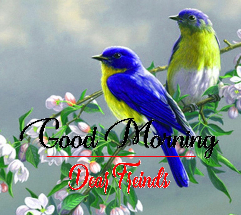 Bird HD Latest Good Morning Pics Images