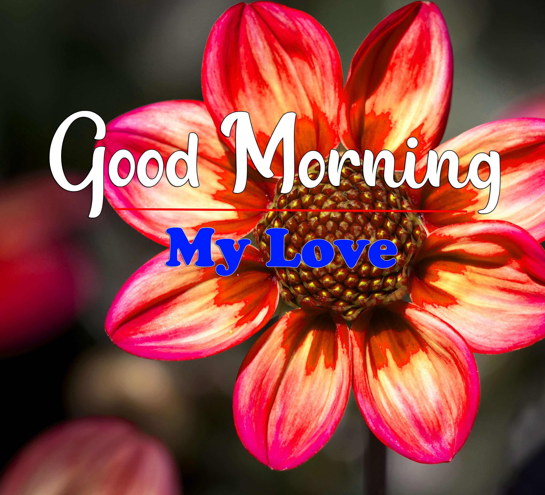 Flower HD Latest Good Morning Wallpaper