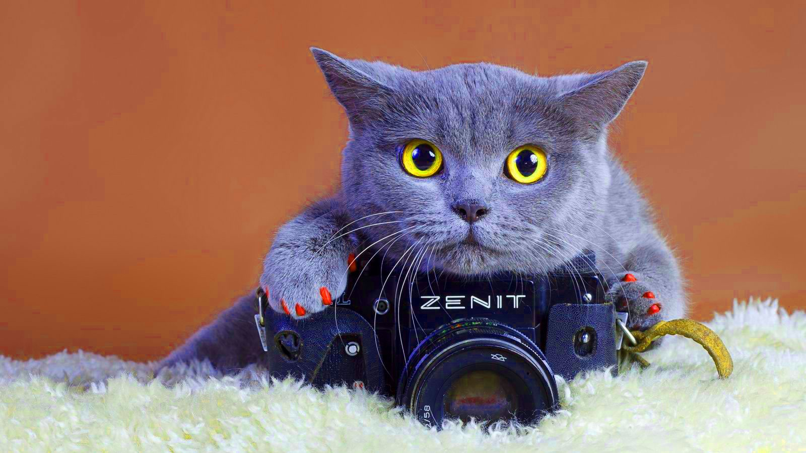 Funny Wallpaper Download With Cat