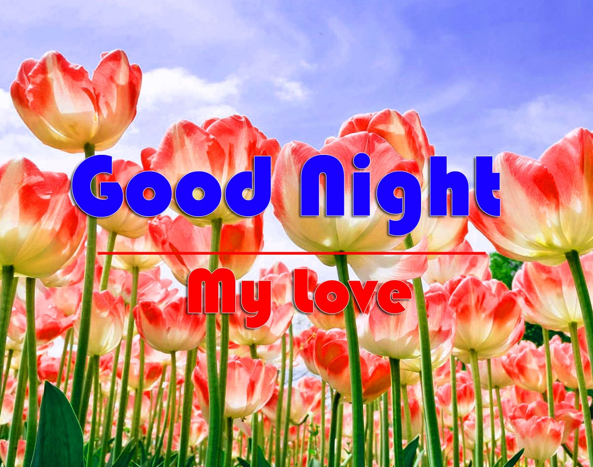 HD Good Night Pics Images With Flower