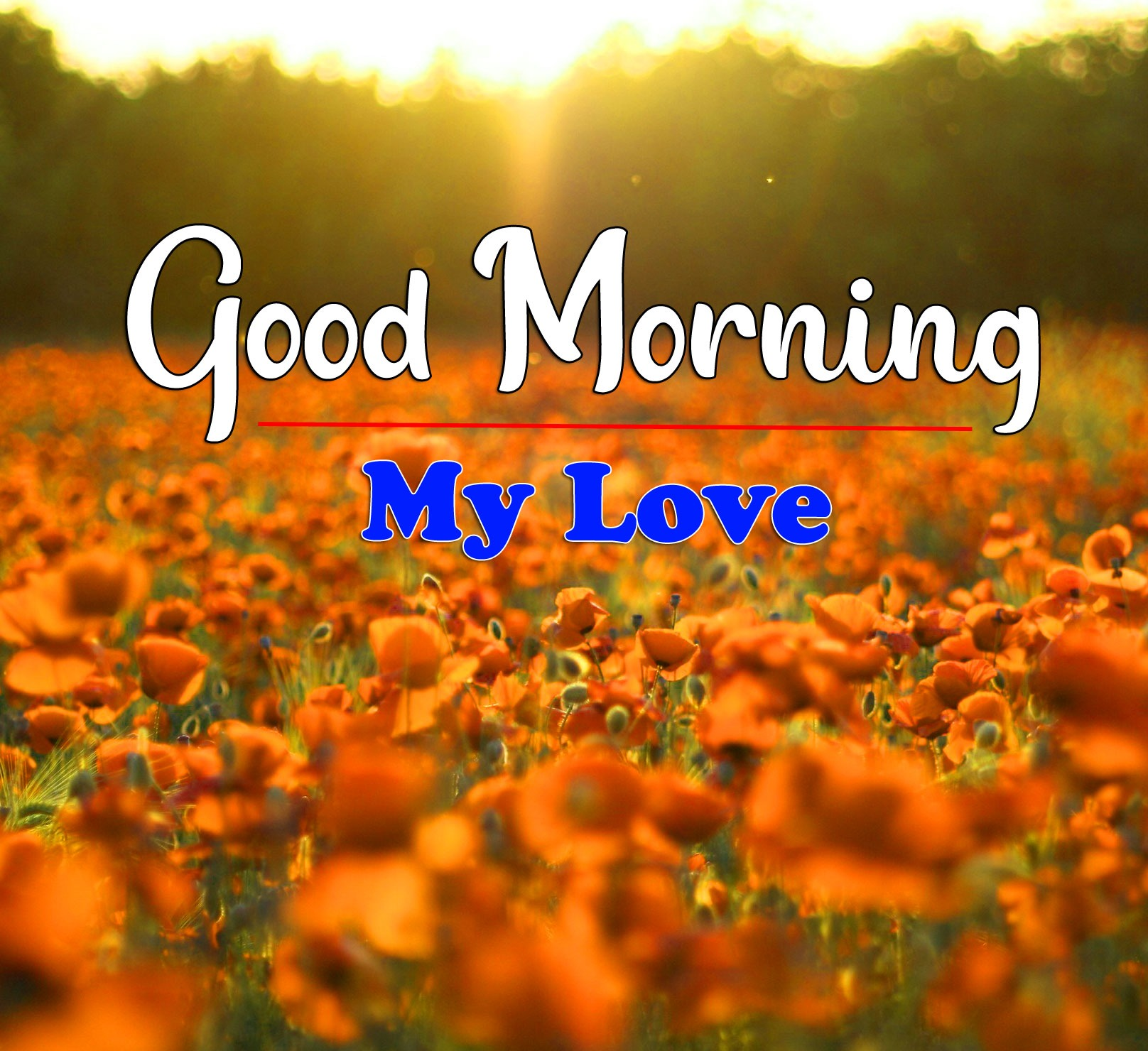 HD Latest Good Morning Photo Download
