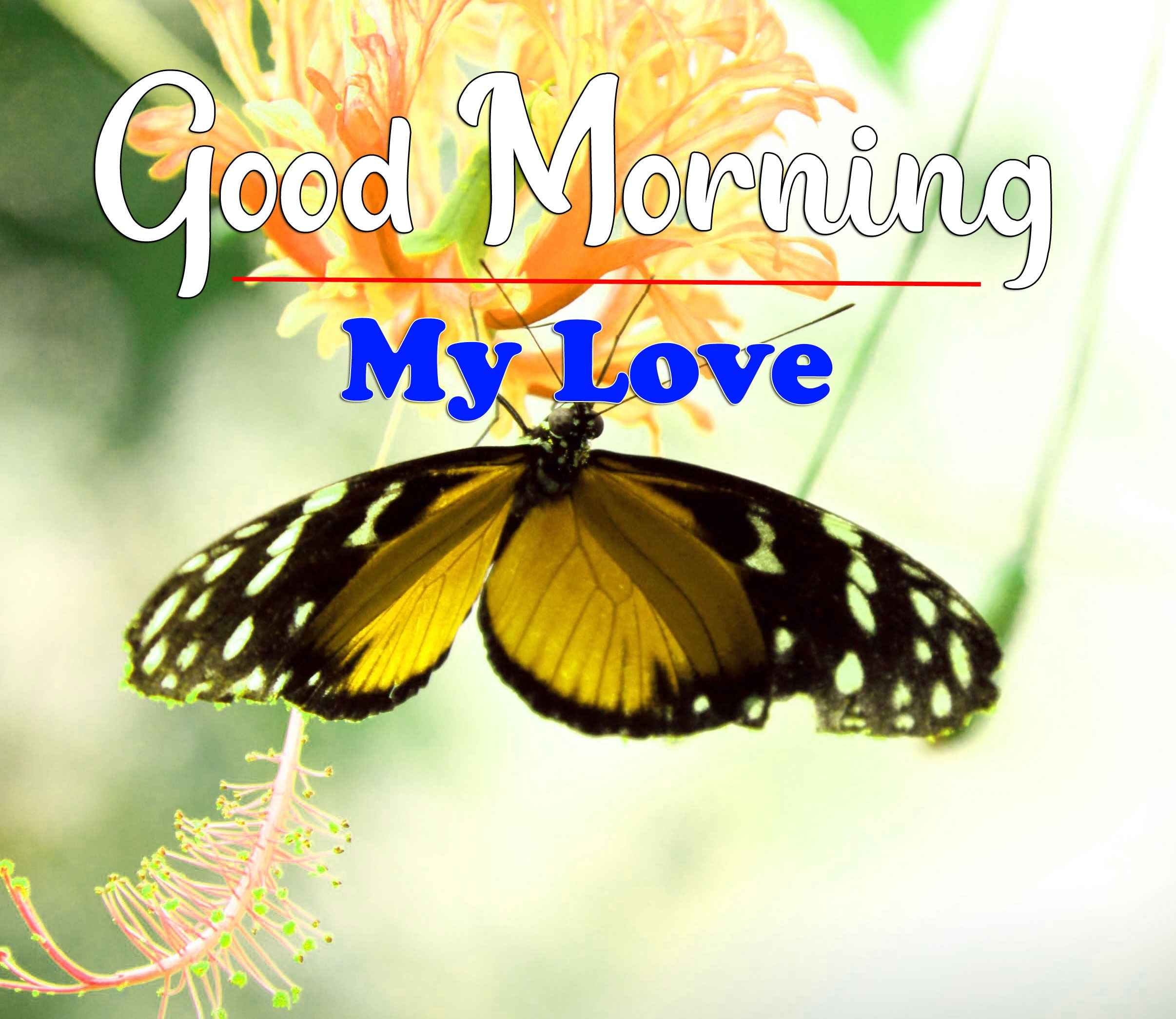 HD Latest Good Morning Photo With Butterfly
