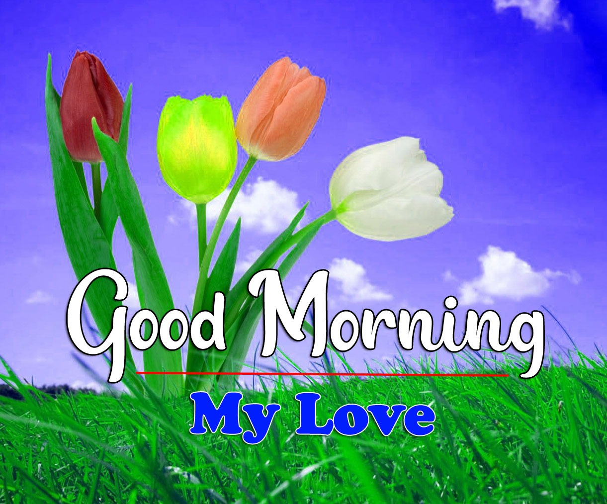 HD Latest Good Morning Photo With Flower