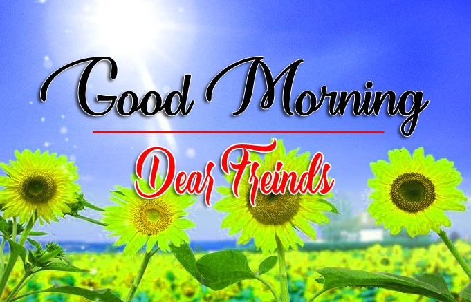 HD Latest Good Morning Pics Images Download