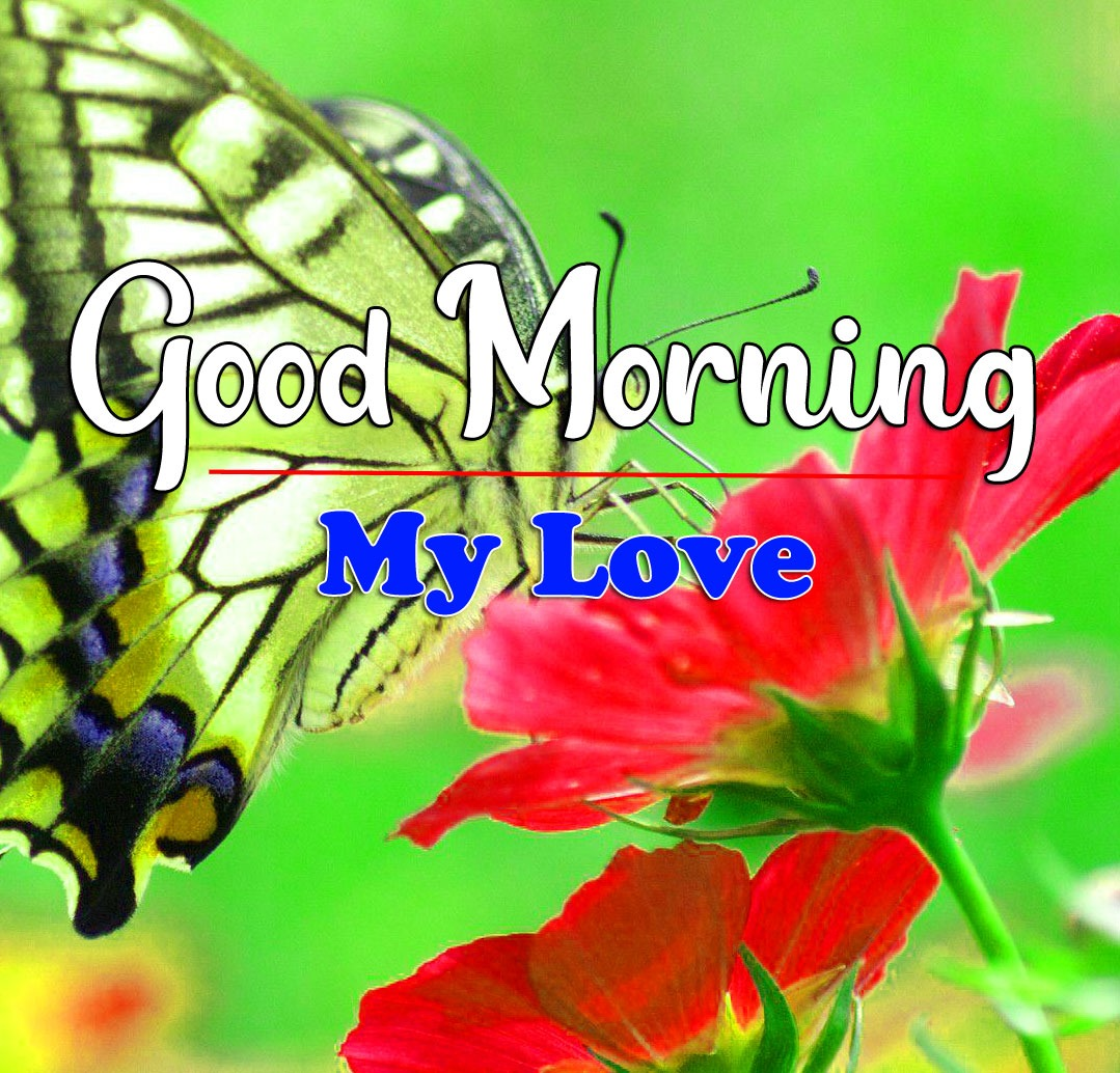 HD Latest Good Morning Pics Pictures With Butterfly