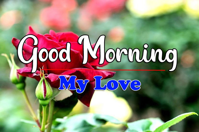 HD Latest Good Morning Wallpaper With Red rose