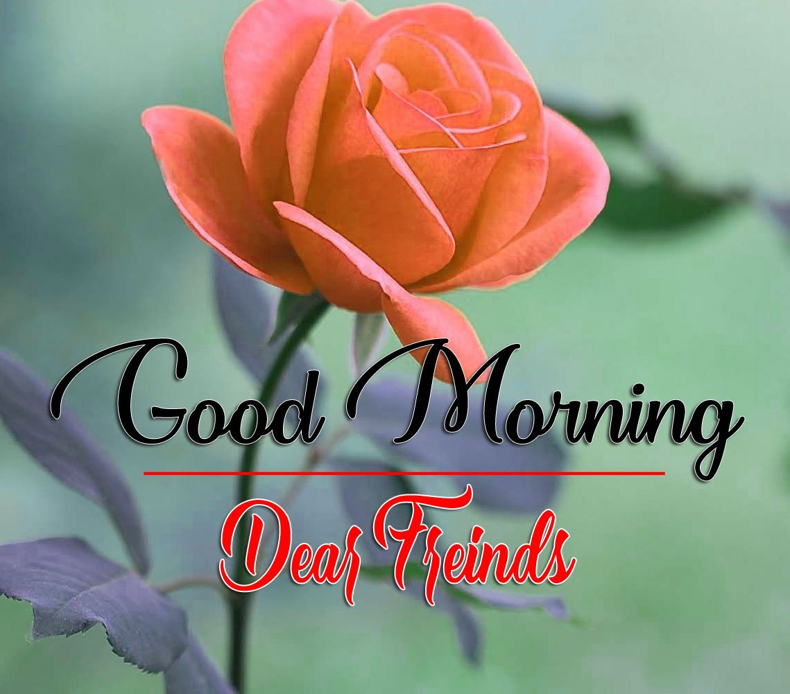 HD Latest Good Morning Wallpaper With Rose