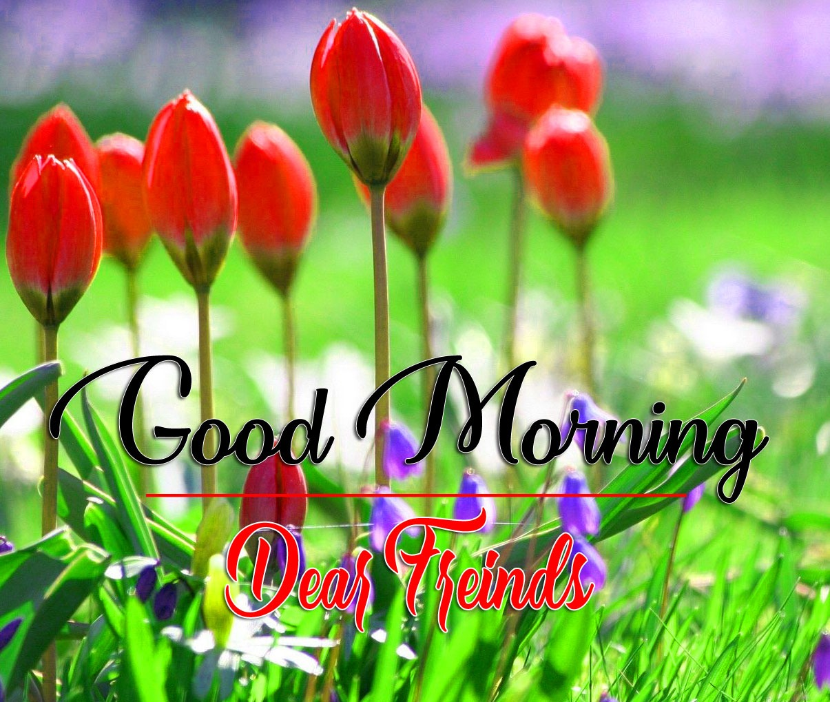 Latest Free HD Latest Good Morning Images