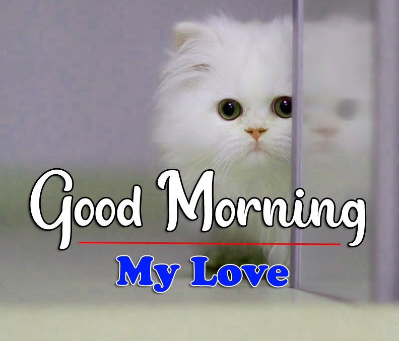 Latest New HD Latest Good Morning Pics Images Download