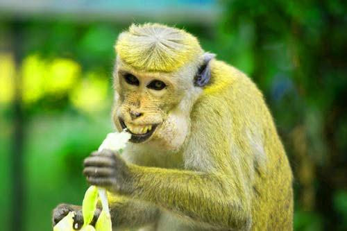 Monkey Funny Whatsapp DP