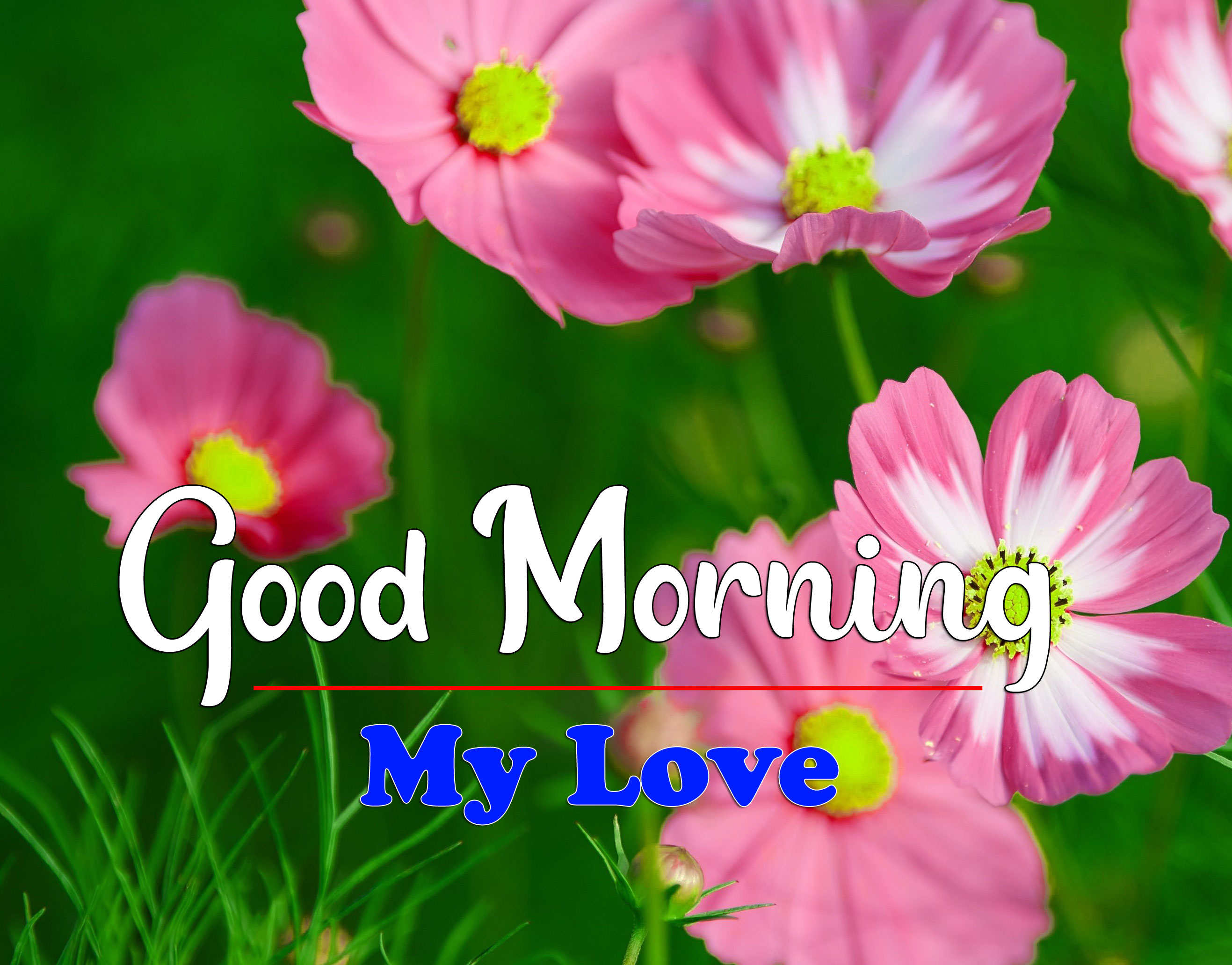 New Free HD Latest Good Morning Images