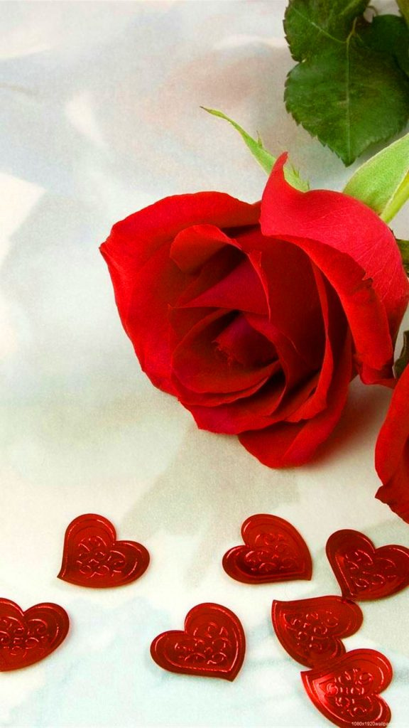Red Rose Whatsapp DP Profile Images