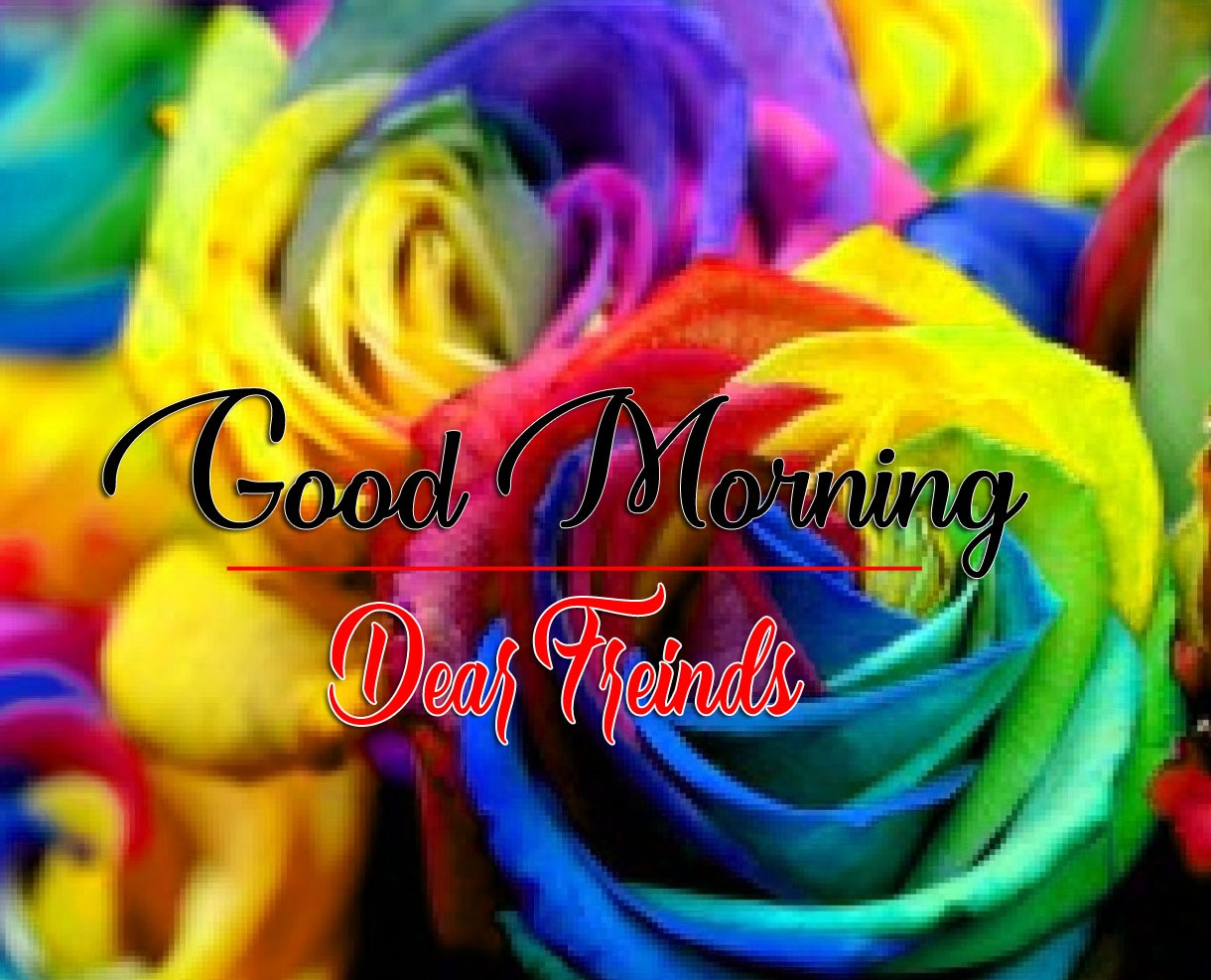 Rose HD Latest Good Morning Images