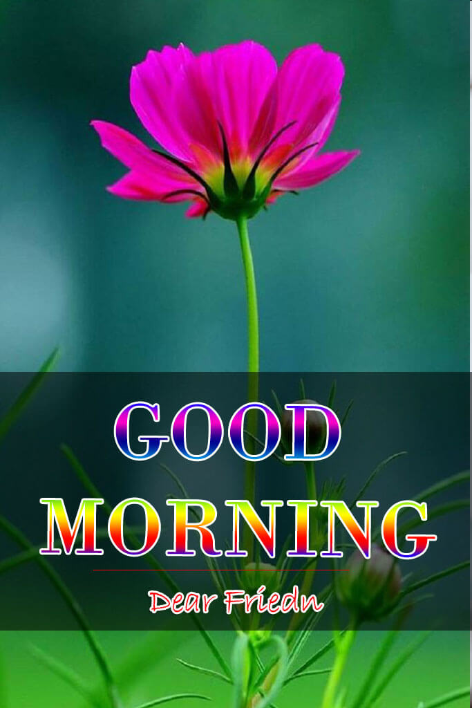 65+ Top Full HD Good Morning Images for Mobile [ Top Collection