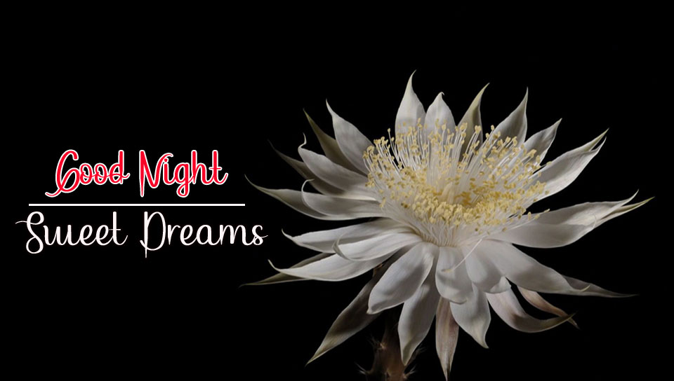 Best Good Night Images photo wallpaper download