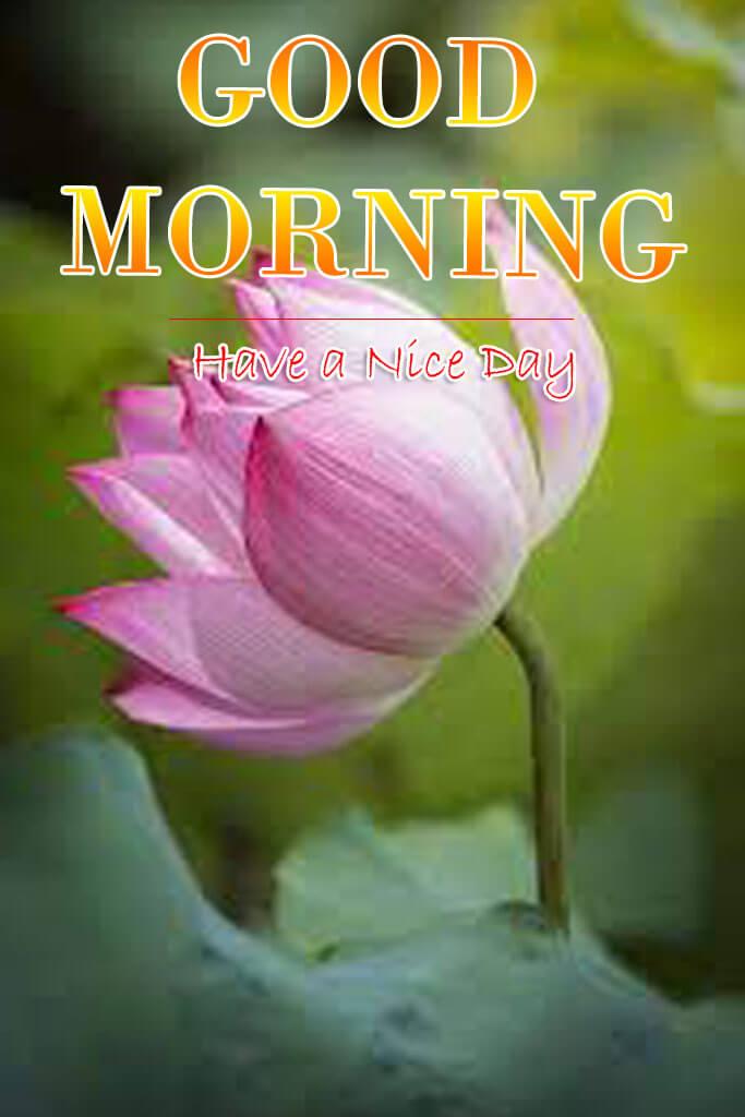 Good Morning God Bless Images Wallpaper Photo