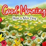 Free 1256+ HD Nature Free Good Morning Images Wallpaper Free Download