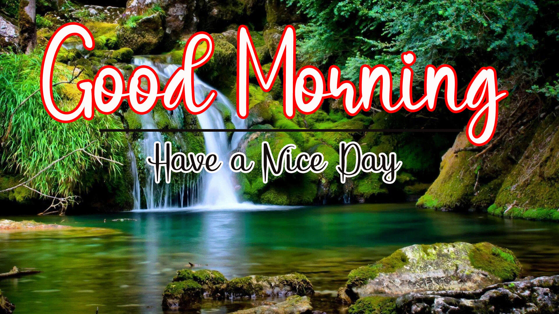 356+ For Romantic Happy Good Morning Pics Download