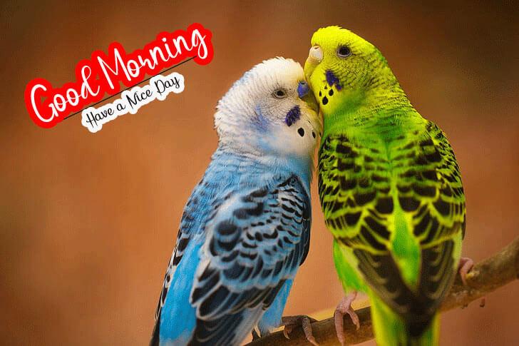 Nature Good Morning Pics Free