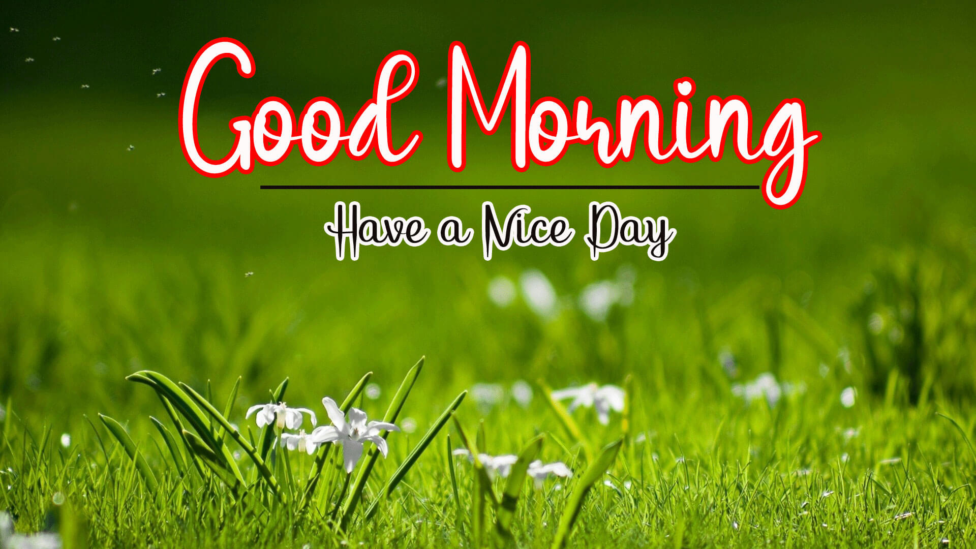 18, 892+ Good Morning HD Images Pics Download