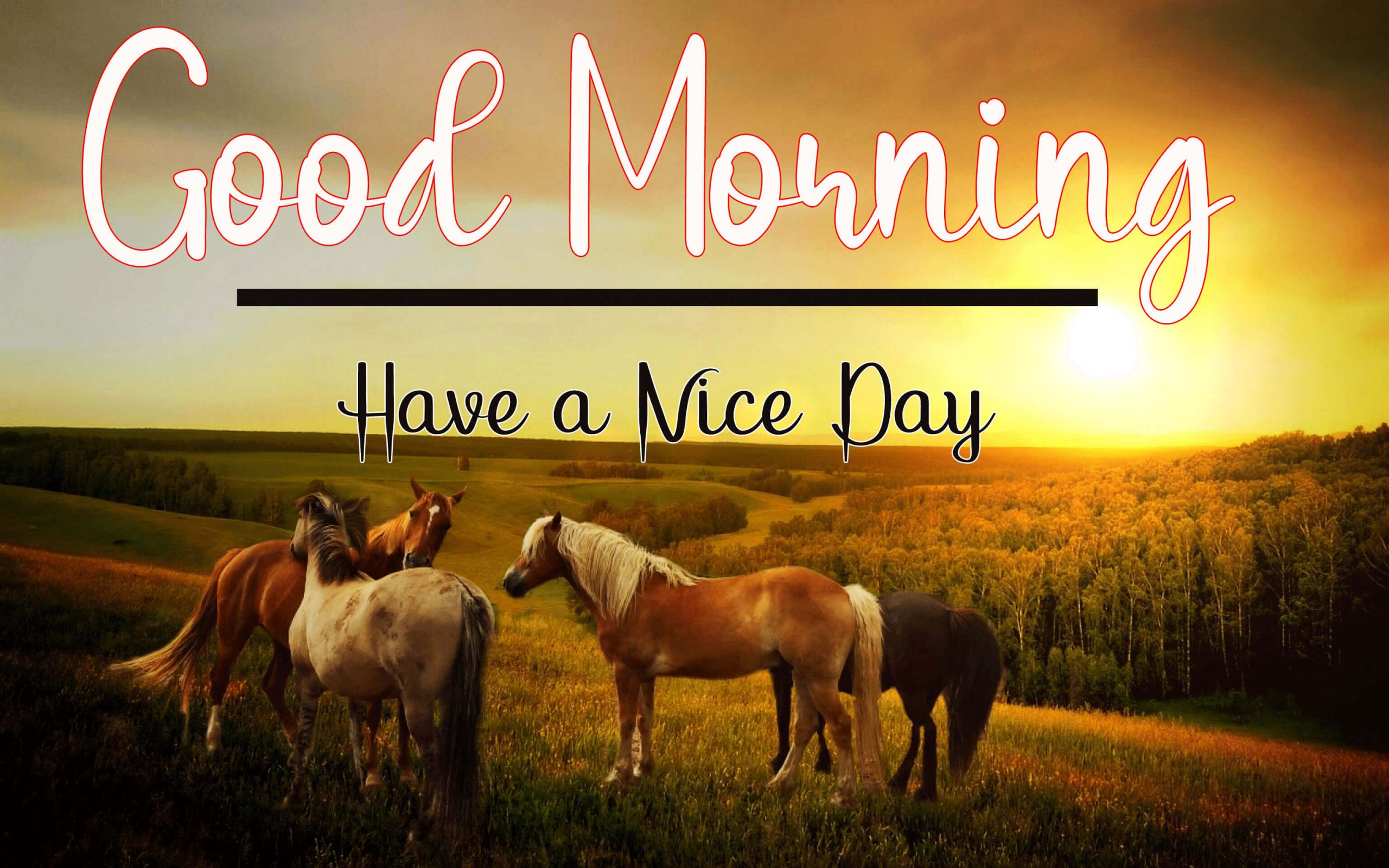 144+ Good Morning Images For Best Friend Download for Whatsapp